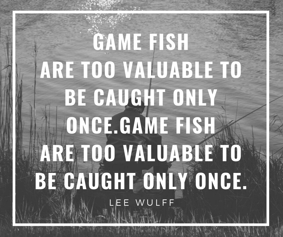 Game fish are too valuable to be caught only once.Game fish are too valuable to be caught only once.