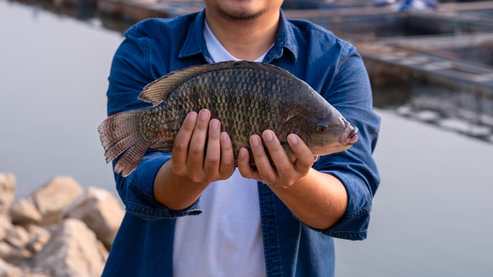 Where to Catch Tilapia